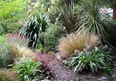 native nz garden plants - Google Search
