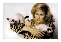 Ursula Andress and rambunctious siamese kittens.  She was the FIRST Bond Girl...Honey Ryder in Dr. No