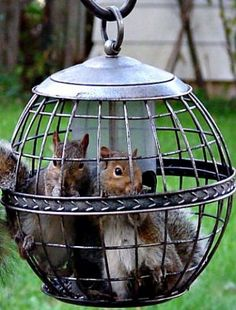 PetsLady's Pick: Funny Captive Squirrels Of The Day...see more at PetsLady.com -The FUN site for Animal Lovers