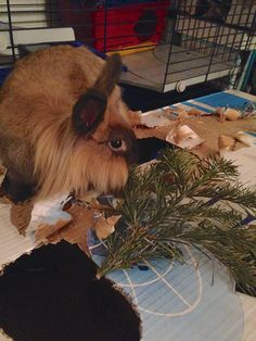 I told you Christmas tree´s tasting good, didn´t I? Dexter on D&D by Inger Johanne 2015