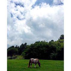 【baragaki】さんのInstagramをピンしています。 《#drive#ドライブ#park#公園#grassland#草原#nature#自然#summervacation#夏休み#summer#夏#woods#森#thunderhead#入道雲#pony#ポニー#horse#馬#animal#動物#japan#iphone6》