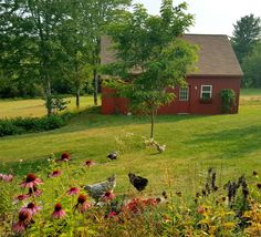 The best is freedom of free range on the farm