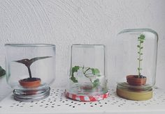 ☆BY INDY☆  instagram: indy_13_  #miniature #greenhouse #jars #masonjars #bonnemaman #plants  #sowing #growing #indoor #cultivate #autumn #fall #plantlife #plants #plantlovers #urbangarden #urbangardening #naturelovers #getcreative #organic