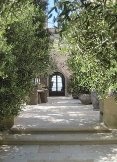 potted olive trees in SeaCliff, San Francisco via architect design™
