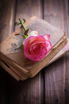 imagen en We Heart It Beautiful Rose Flowers, Beautiful Flowers Wallpapers, Beautiful Scenery, Beautiful Pictures, Flower Phone Wallpaper, Flower Wallpaper, My Flower, Flower Art, Book Flowers
