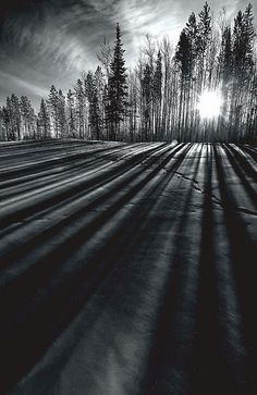 Northern BC is full of amazing spots that can take your breath away, like these tall winter shadows near Fort Nelson, BC. Photo by Dan Newcomb Photography. THE VERY NATURE OF BLACK Light And Shadow Photography, Line Photography, Black And White Photography, Amazing Photography, Landscape Photography, Nature Photography, Fitness Photography, Silhouette Photography, Monochrome Photography