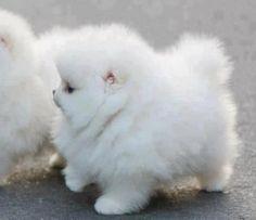 It's so fluffy!! I'm gonna die!!