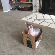 Cats love cardboard boxes. Science has proved this to be a universal truth. Place a cardboard box on the floor, and any and all nearby cats will instantly hop inside of it. @theadventuresofmorisandmilo