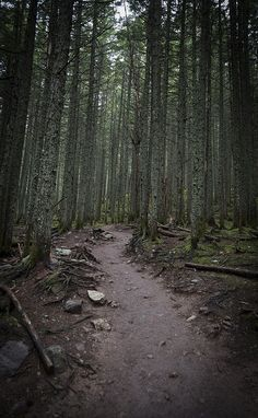 ladylandscape:(via Avalanche Path | Flickr - Photo Sharing!)