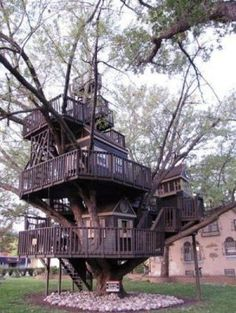 Best tree house ever!!!! So fun.