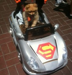 and yes, of course my dog needs a car