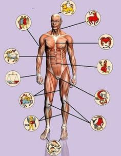 Medical Astrology Body Parts Medical Astrology, Ugly Hair, Eye Pain, Mammary Gland, Pregnancy Problems, Dental Problems, Body Organs, Diet, Health