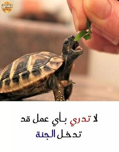Arabic English Quotes, Arabic Quotes, Heart Gif, Cool Words, Poems, Religion, Inspirational Quotes, Sayings, My Love