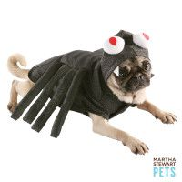 $10 Spider Costume for your dog.  He'll forgive you... someday.