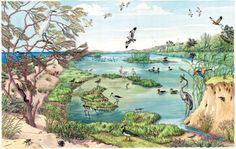 I colori di Conci- Conci's colours: Salty marsh- WWF panel