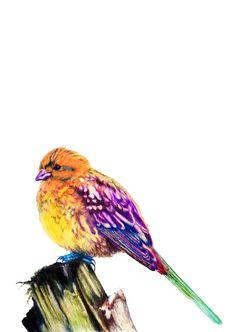 "Alabama state bird Yellowhammer 10"" x 12"" Color Pencils $450.00 prints $75.00"