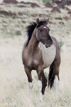Wild Horse, Steens Mountain, Oregon ~ Ken Archer