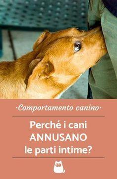 Perché i cani annusano le parti intime? Ti è già capitato, vero? Ti spieghiamo tutte le cause analizzando il comportamento canino e quest'abitudine alquanto particolare dei cani! #animalpedia #animali #animals #cane #dogs #doglovers #dogtraining #comportamentocane #partiintime #