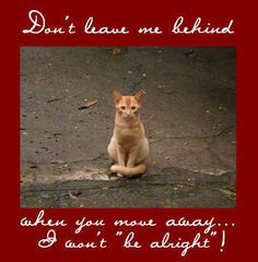 "DON'T leave me behind when you move away...  I Won't ""be alright""!  Please don't abandon your pets when you ""leave"".  Find them a home, take them to a shelter or....TAKE THEM WITH YOU.  Rescue a cat or dog, puppy or kitten.  Adopt. Shelter. Rescue. Foster. Transport.  DONATE."