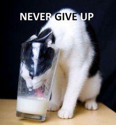 Never Give Up - Never surrender!