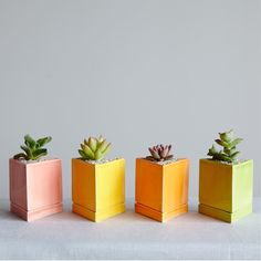 Vogue named The Sill one of the best places to purchase summer succulents!
