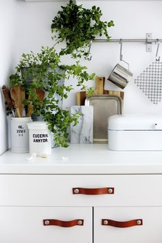 Today I would love to share a few images from my new kitchen. We have a pretty small kitchen and I don't like it, when small rooms look too crowded. Kitchen Interior, New Kitchen, Kitchen Dining, Kitchen Decor, Kitchen Corner, Green Kitchen, Kitchen Ideas, Kitchen Plants, Kitchen Cabinets