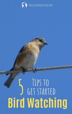 5 Easy Tips to Help You Get Started Bird Watching Looking for a relaxing and free hobby? Why not give bird watching a try? We have five tips to help you get started bird watching. Watch Drawing, What Is A Bird, Camping Activities, Camping Hacks, Road Trip Games, Family Road Trips, Backyard Birds, Bird Species, New Hobbies