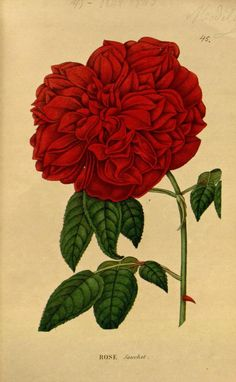 ser.2:v.1 (1842-1843) - Annales de flore et de pomone : - Biodiversity Heritage Library