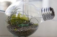 Terrariums can bring life to any home. Check out these simple projects.