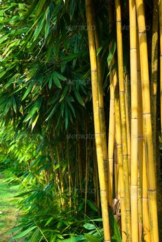 bamboo ...  abstract, asia, background, bamboo, biological, climate, culture, decoration, feng-shui, forest, freshness, garden, gardening, green, growth, japan, japanese, nature, ornamental, plant, tree, tropical, zen