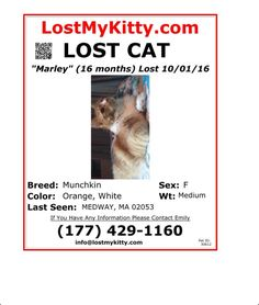 Lost Orange and White Cat Named Marley: Medway, MA If you have any information please email us at info@lostmykitty.com or call us directly at 877-818-0060. Orange And White Cat, Cat Names, Lost & Found, Cats, Gatos, Cat, Kitty, Kitty Cats
