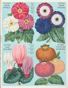 Sutton's seed catalogue