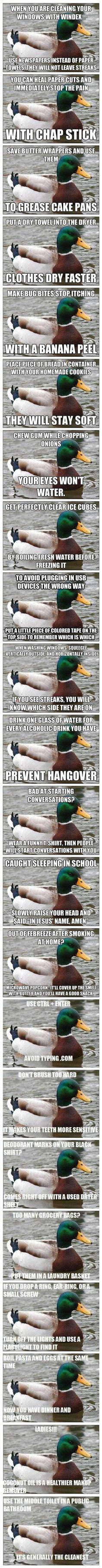 Dump A Day Funny Advice From Mallard Meme - 24 Pics
