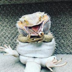 Змеи и другие рептилии.