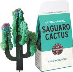 Cactus Crystal Growing Kit