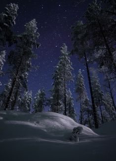 Magical Starry Night Photography By Joni Niemelä Joni Niemelä is an expert photographer with a passion for capturing incredible images of the sky. His photography focuses on his motherland, Finland,. Winter Photography, Night Photography, Landscape Photography, Nature Photography, Landscape Photos, Winter Szenen, Winter Magic, Winter Night, Ciel Nocturne