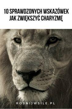 Self Development, Mindfulness, Humor, Life, Animals, Konmari, Animales, Animaux, Humour
