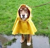 #dog in the rain