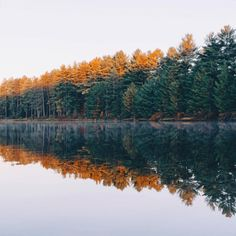 Nature + Landscape Photography Inspiration · Beautiful Moody Nature · Fall Colors · Forest
