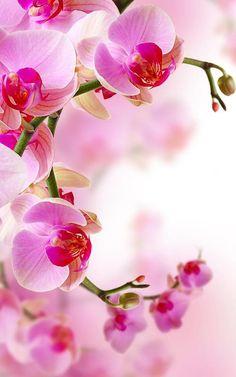 Floral Wallpaper Phone, Orchid Wallpaper, Zen Wallpaper, Whats Wallpaper, Cute Patterns Wallpaper, Iphone Wallpaper, Pink Flowers, Beautiful Flowers, Pink Orchids