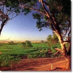 Local Vineyards.