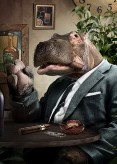'Chop A Hippo - Open photoshop contest is now closed. The contest received 20 submissions from 16 creatives. Human Zoo, Photoshop Images, Cat People, Animal Heads, Mundo Animal, Pet Clothes, Surreal Art, Animal Drawings, Cool Artwork