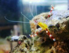 www.aqua-polis.pl Aqua, Coral, Caribbean, Fish, Pets, Animals, Water, Animaux, Animal