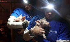 Ativistas usam a realidade virtual como ferramenta para expor a crueldade da indústria da carne