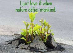 i just love it when nature defies mankind