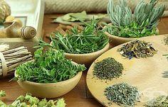 Използвайте 7 билки за пречистване на белите дробове - изображение