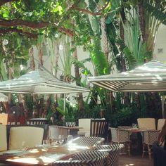 Such a pretty patio at the Raleigh #Hotel in South Beach. #Beach #Miami #Travel