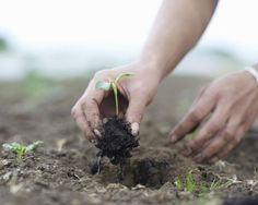 How to Harden Off Plants for Transplanting