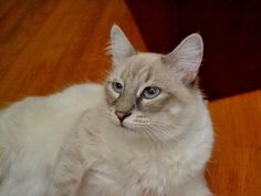 Benny was adopted May 2014, is doing great with his family