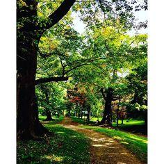 【yasuhirooon】さんのInstagramの写真をピンしています。《ULMUS FOREST 🌿🌿 Botanical Garden🍀🍁🌲 Hokkaido University  Sapporo City  Hokkaido  Japan  ハルニレの林 北海道大学植物園 札幌市 北海道 #札幌市 #instagram #instafollow #follow #forest #instagreen #green #autumn #北海道 #hokkaidouniversity #sapporo #botanicalgarden #garden #botanical #北海道大学植物園 #林 #ハルニレ #ハルニレの木 #森 #木漏れ日 #木立》